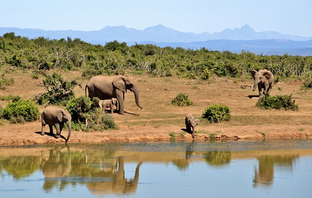 sloni u vody