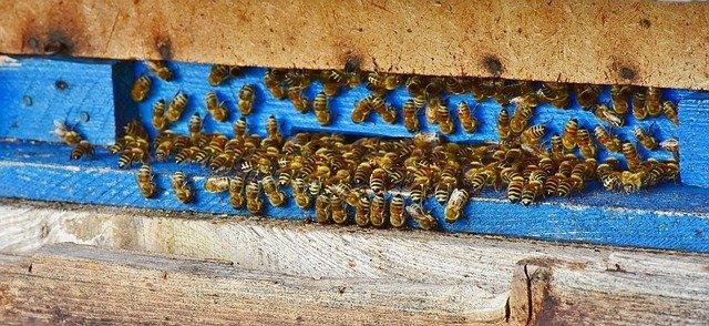 práce včel