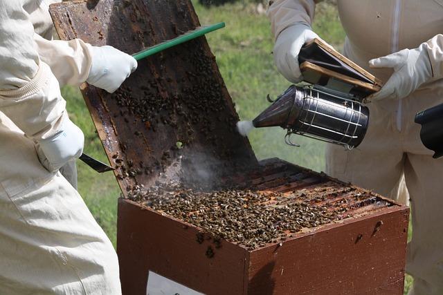 práce včelařů