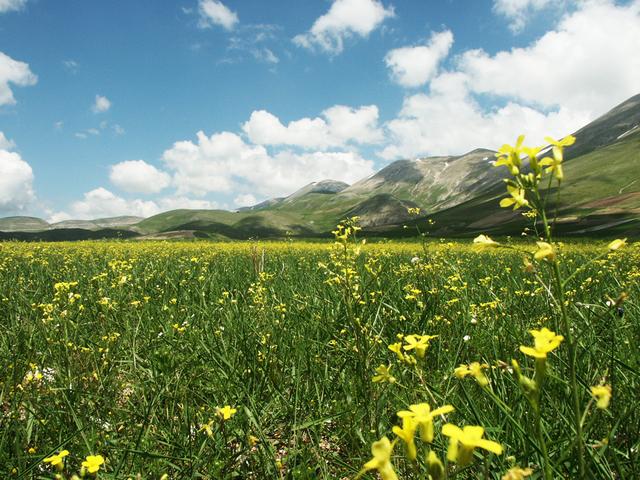 louka s rozkvetlými žlutými květinami, hory, kopce v dáli